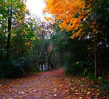 Autumn Trail by MarianBendeth