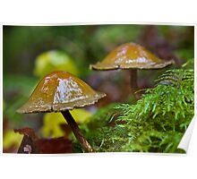Dunce Cap Mushrooms Poster