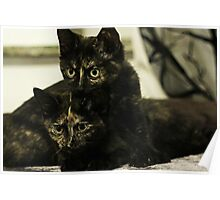 Soli & Nebula the tortie cats #2 Poster
