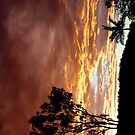 Golden sky by Elisabeth Dubois