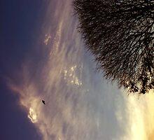 Australian sky by Elisabeth Dubois