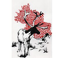 Reindeer drawing Photographic Print