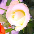 Surreal Rose by Elisabeth Dubois