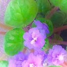 Violets are blue? by Elisabeth Dubois