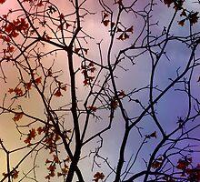 Australian sky 6 by Elisabeth Dubois