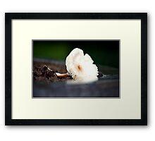 Flower -Mushroom Framed Print