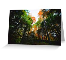 A Break in  the Canopy Greeting Card