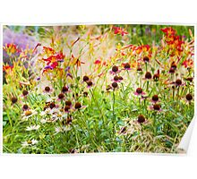 Echinacea and Hemerocallis Poster