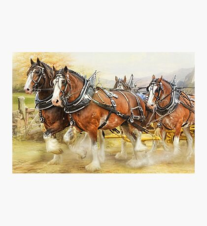Clydesdales in Harness Photographic Print