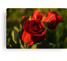 Ruby Red Birthday Roses  Canvas Print