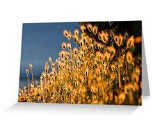 Sun-Glow  Bunny Tail Grass  [ Marlo Magic ] Greeting Card