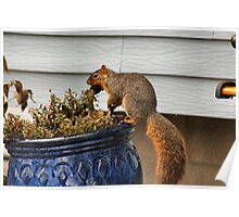 Pot Topper Squirrel Poster