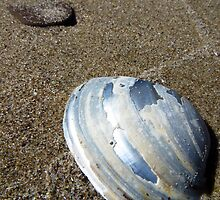Lake Erie Mussel Shell by MSRowe Art and Design