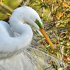 Great White Egret Portrait by Kathy Baccari