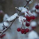 Frozen berries by Algot Kristoffer Peterson