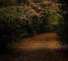 Autumn Woodland Path by Richard Hepworth