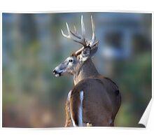 Backyard Buck Poster