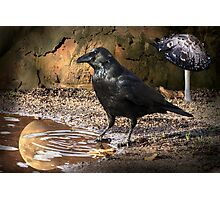 The Raven Moon Oracle Photographic Print