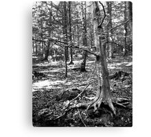 Nature 30 Canvas Print