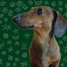 Dachshund Snow by DebiCady