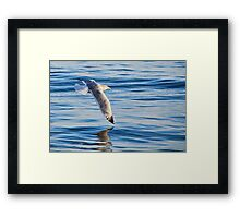 Wing Dipping Framed Print