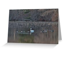Swan swimming with Canadian geese Greeting Card