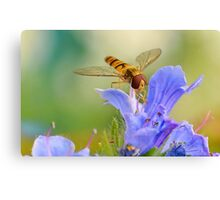 Hoverfly   [revisited] Canvas Print