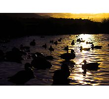 Ducks silhouette sunset  Photographic Print