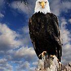American Bald Eagle by Leann  Rardin