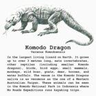 Komodo Dragon by noroads