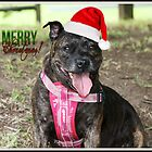 Christmas Staffy by Vicki Childs