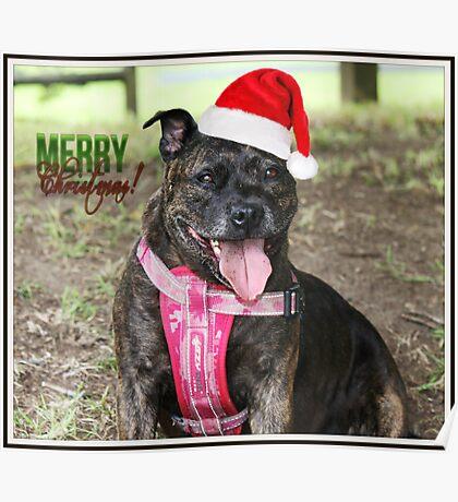Christmas Staffy Poster