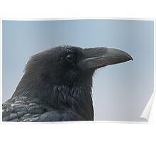 Blue Raven Poster