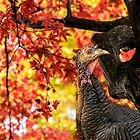HAPPY THANKSGIVING FROM WILD TURKEY by LudaNayvelt