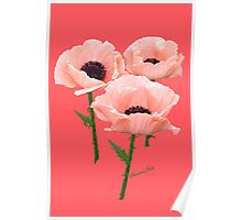 When You Say Nothing At All~ Poppies Poster