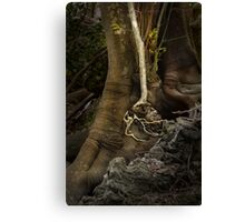 Valley of Shadows, Australia Canvas Print