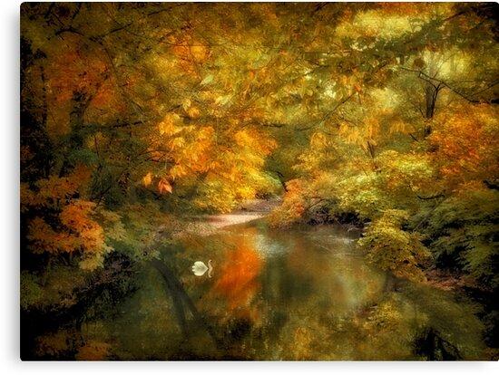 Woodland River Lights by Jessica Jenney