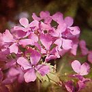 Textured Lunaria by Linda  Makiej