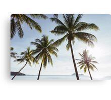 Beachfront Coconut Palms Canvas Print