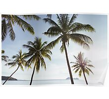 Beachfront Coconut Palms Poster