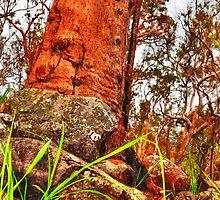 Trees 4 by Skyangel