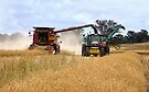 Harvesting Canola ... Cootamundra NSW by Rosalie Dale