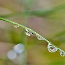 drops on a BLADE by grsphoto