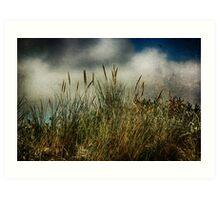 Beach Grasses Art Print