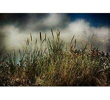 Beach Grasses Photographic Print