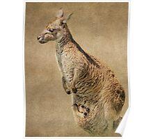 Hoo Roo Kangaroo Poster