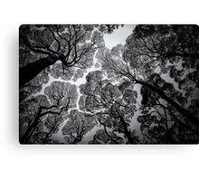 Overhead BW Canvas Print