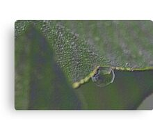 Dew Drop Canvas Print