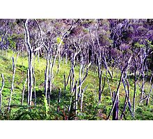 Ghost Forest Photographic Print