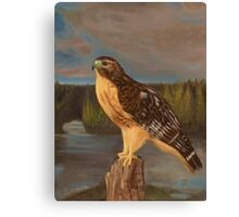 Lakota - Red-Shouldered Hawk Portrait Canvas Print